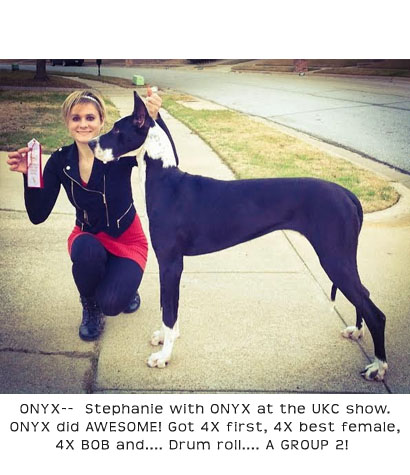 ONYX, Mantle Female Great Dane, UKC Champion