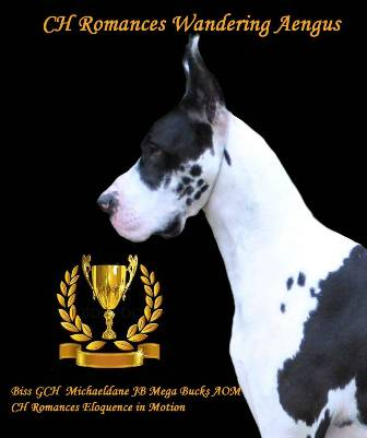 """AENGUS,"" A Champion Harlequin Great Dane Stud dog"