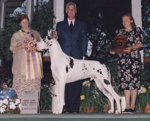 AJ 1998 BISS Ch. BMW Arhitect Of Jerico great dane