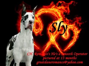 sly stud great dane
