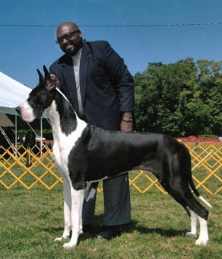 rocky mantle great dane stud with mike chiles