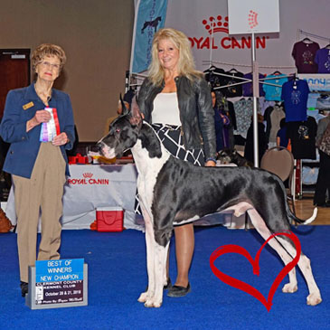 thor mantle great dane new champion