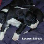 rosco & beau 3 weeks
