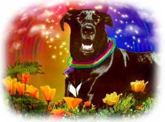 Lola the wonder dog