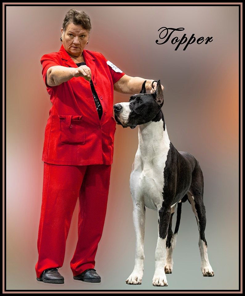 topper mantle great dane stud