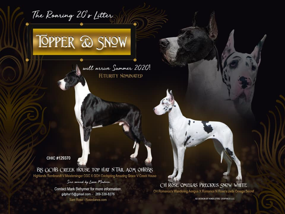 topper and snow show litter great dane puppies poster