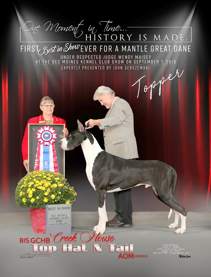 topper great dane stud