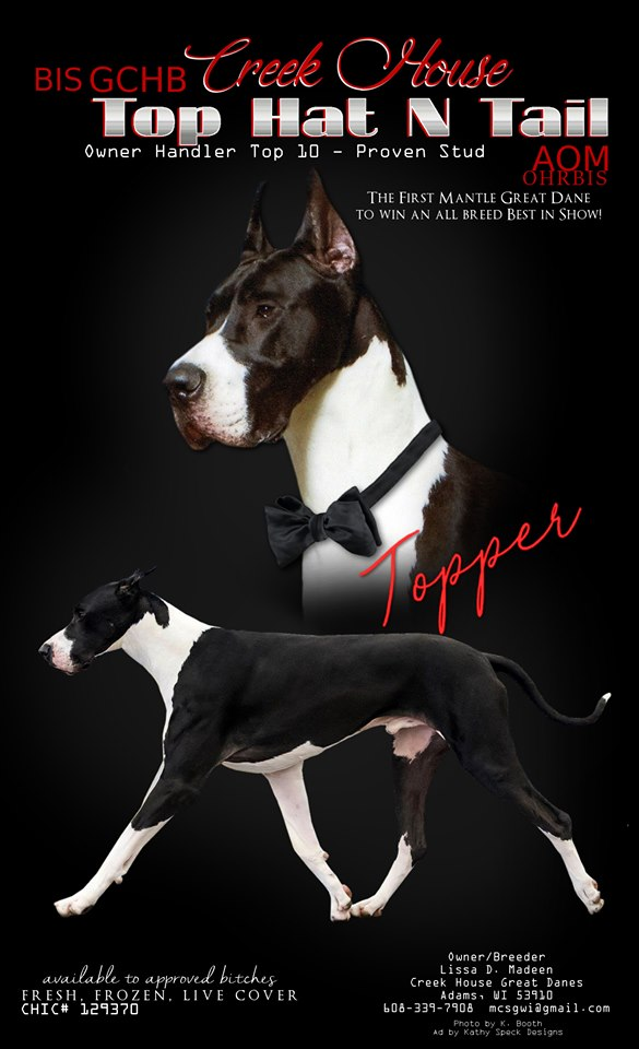 topper mantle great dane stud best in show