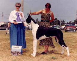 am ch ticonderoga mantle great dane